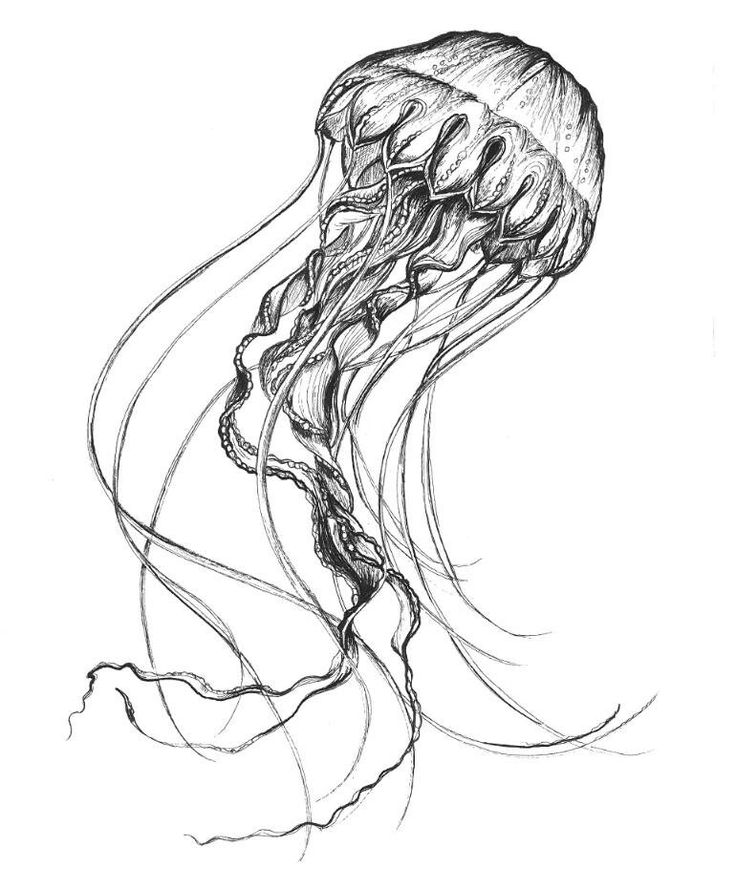 Jellyfish Images To Draw Wallpaper Download