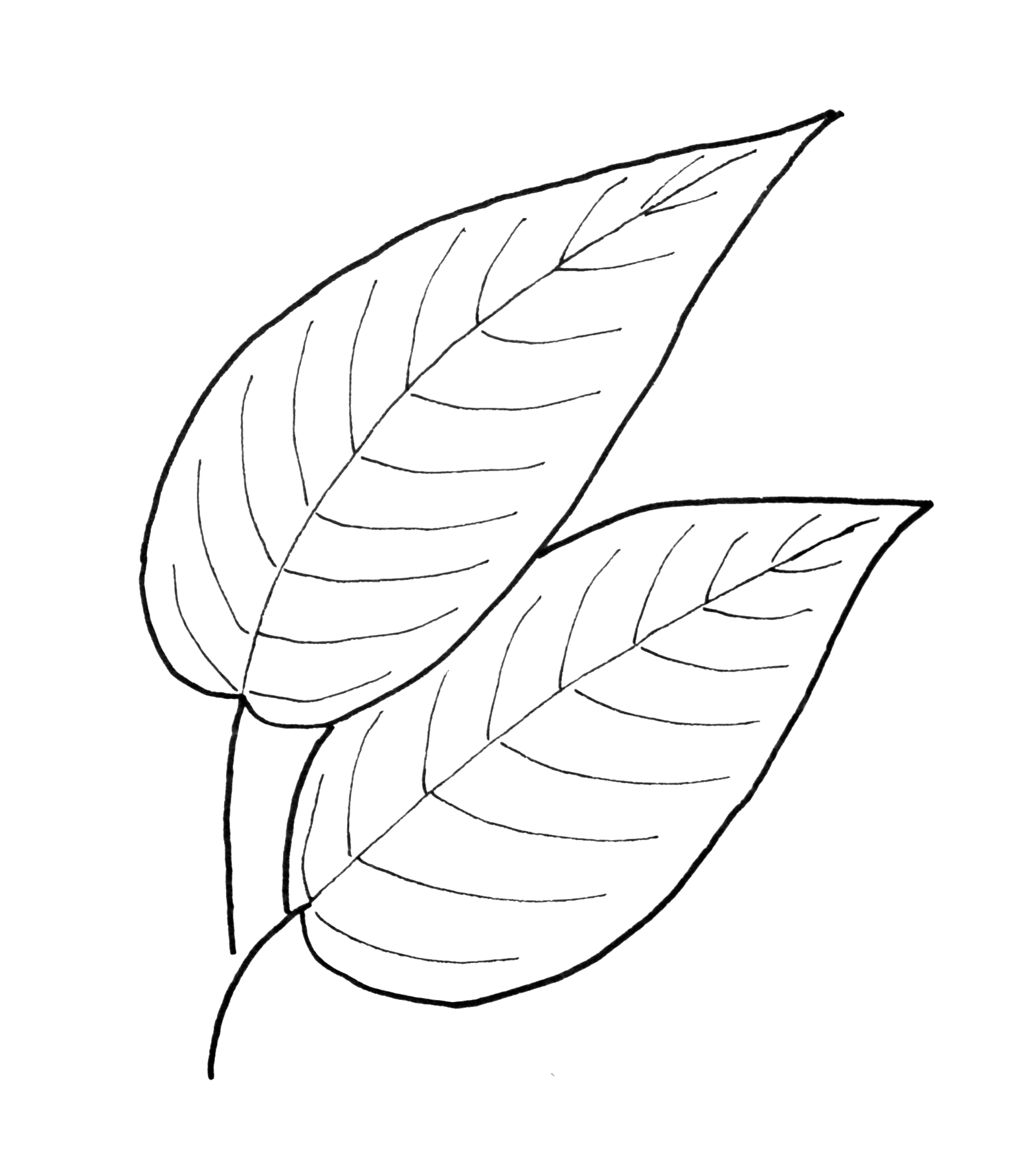 Simple Leaf Drawing At Getdrawings