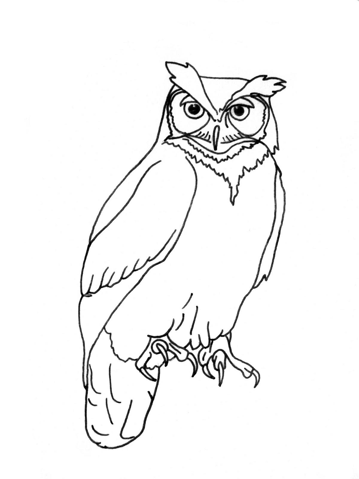 Simple Owl Drawing at GetDrawings | Free download (1200 x 1600 Pixel)
