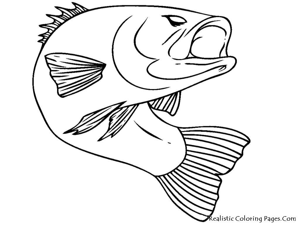Smallmouth Bass Drawing At Getdrawings
