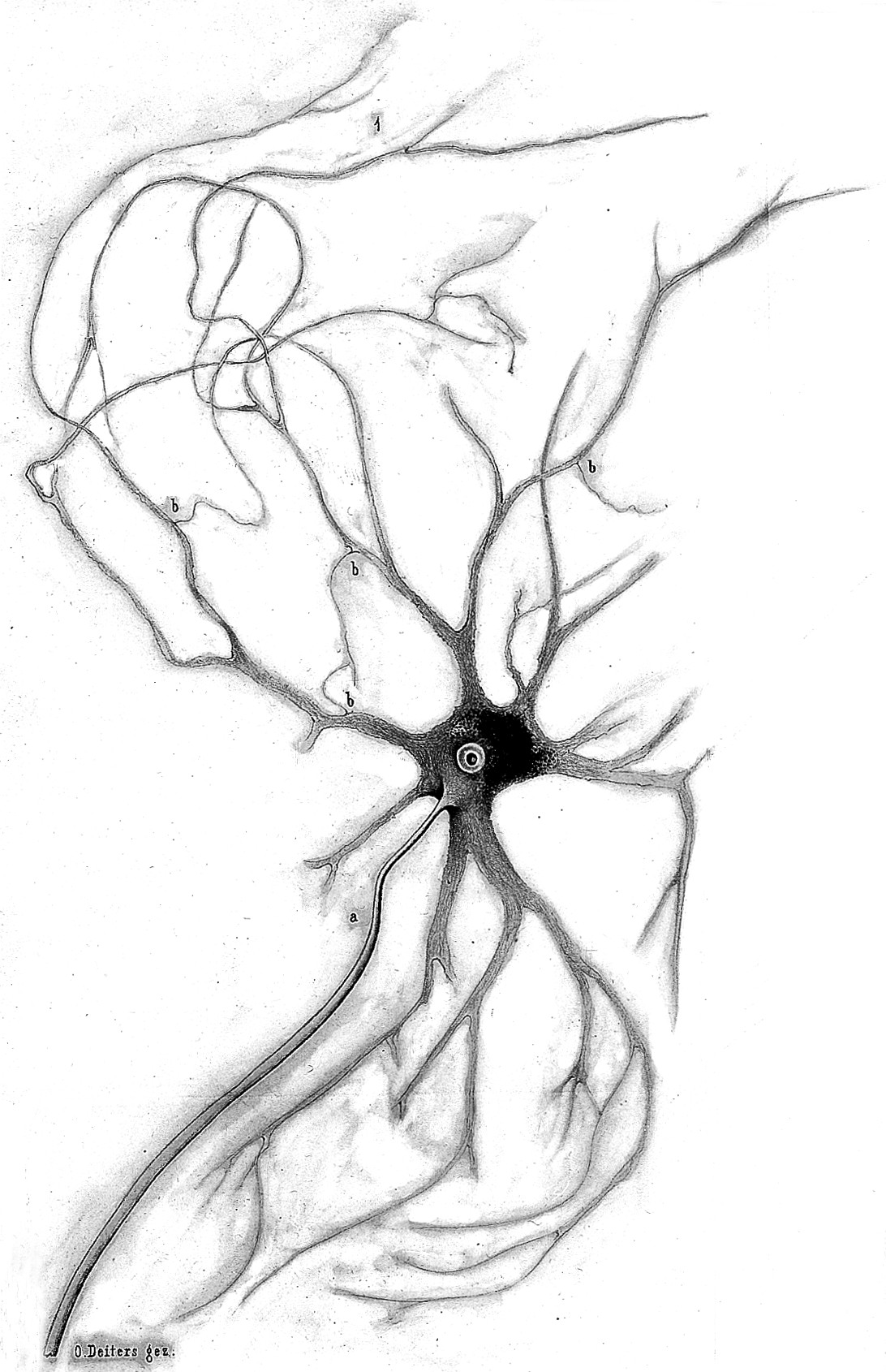 Spinal Cord Drawing At Getdrawings