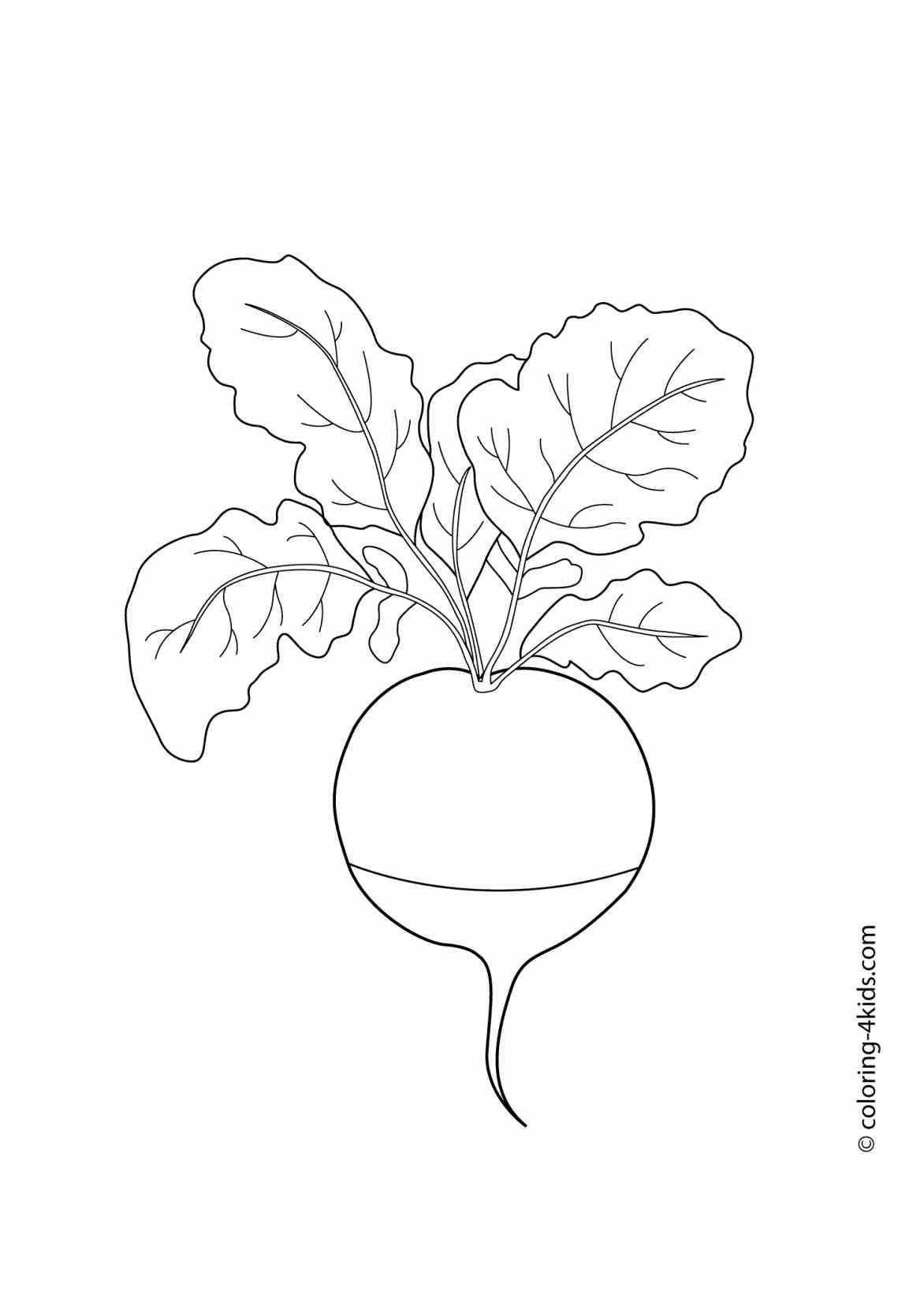 Sweet Potato Drawing At Getdrawings