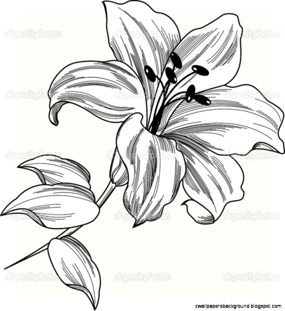 Lily Flower Tattoo Outline Drawing