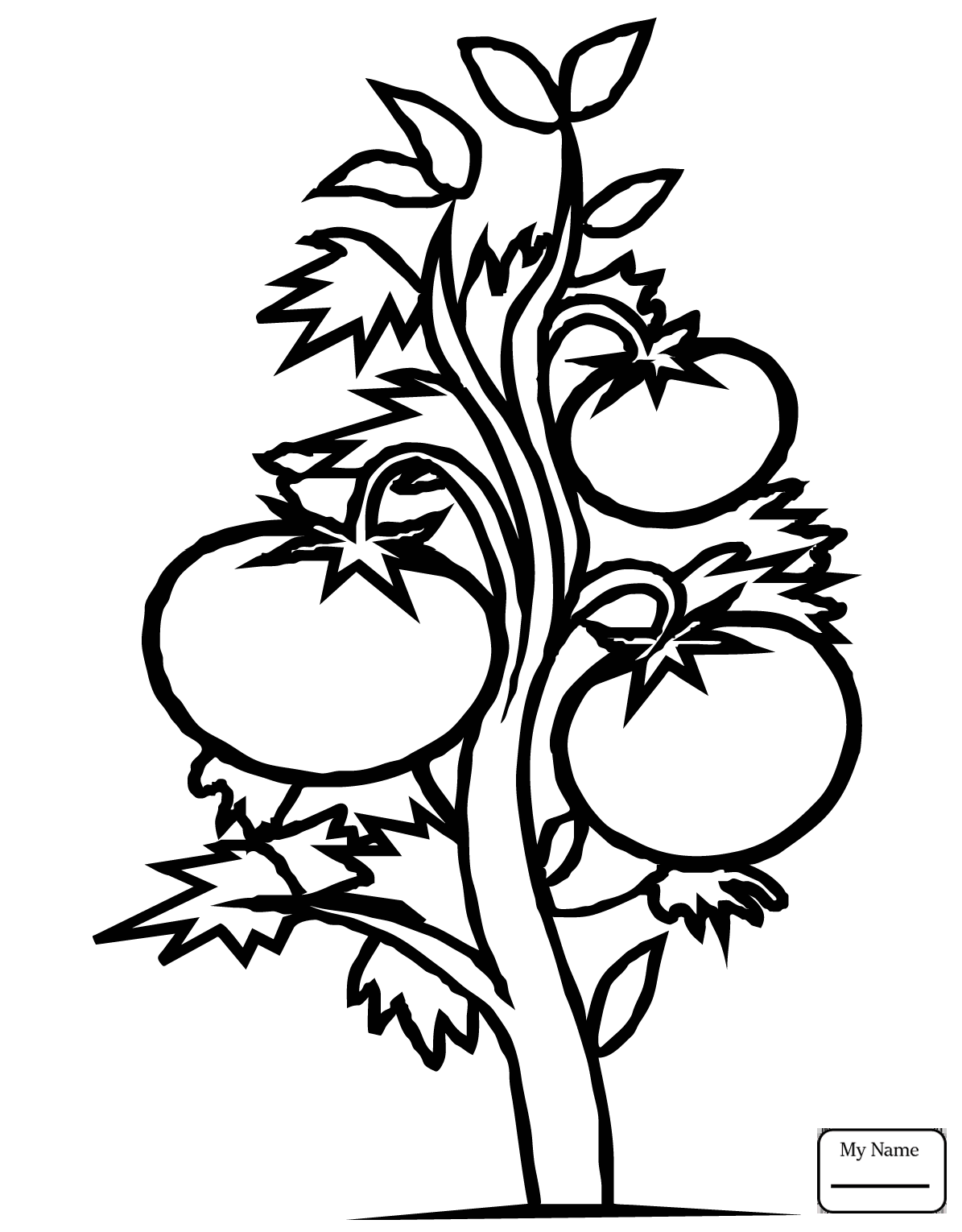 Tomato Plant Drawing At Getdrawings