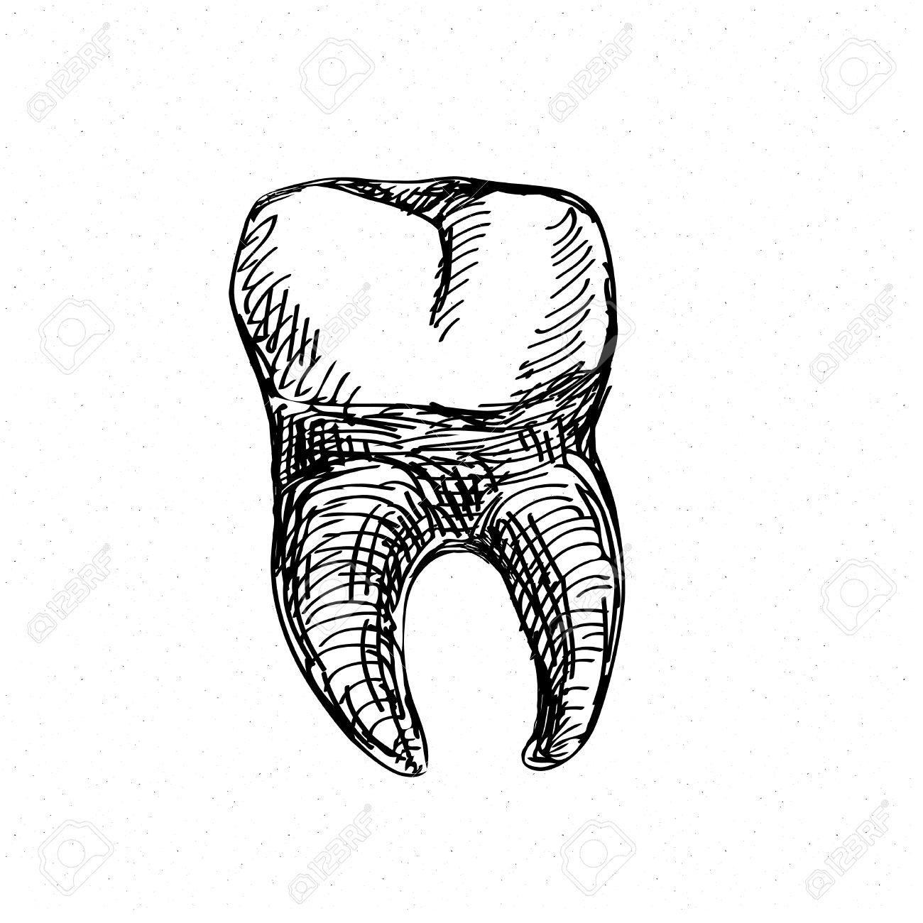 Tooth Drawing At Getdrawings