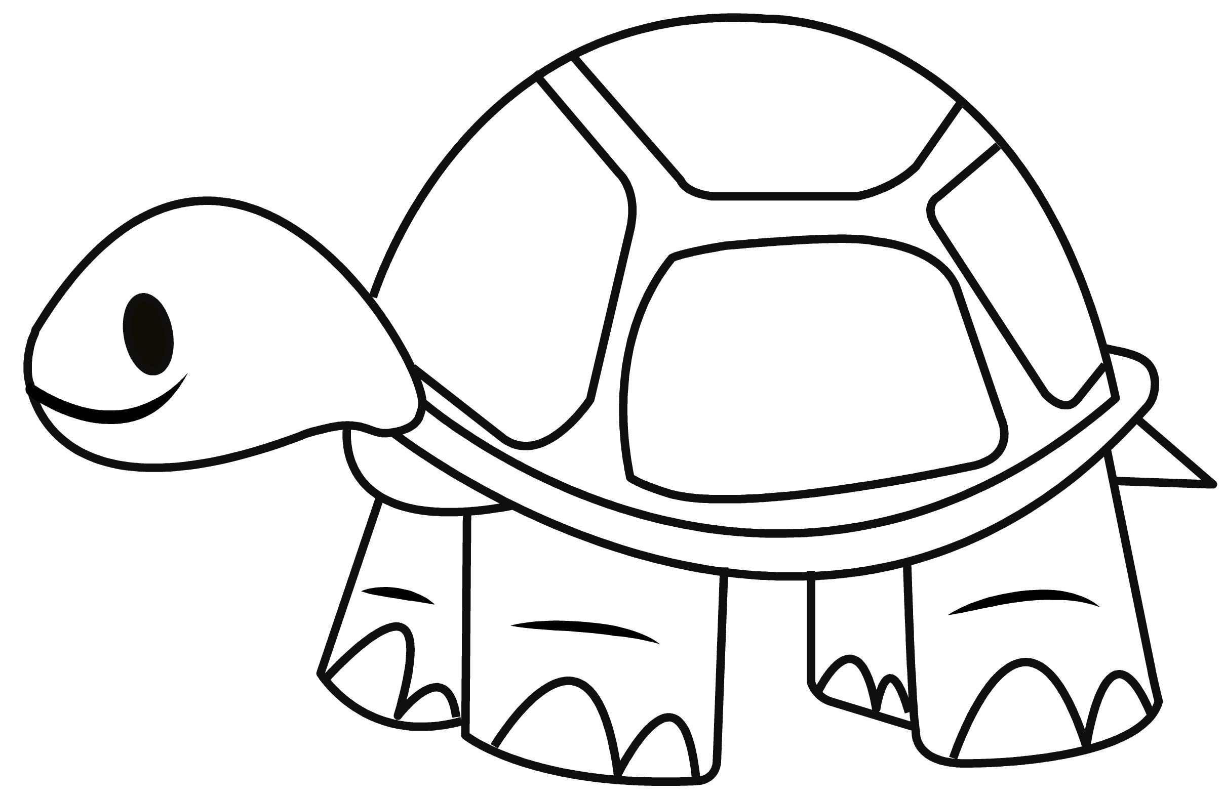 Tortoise Drawing At Getdrawings