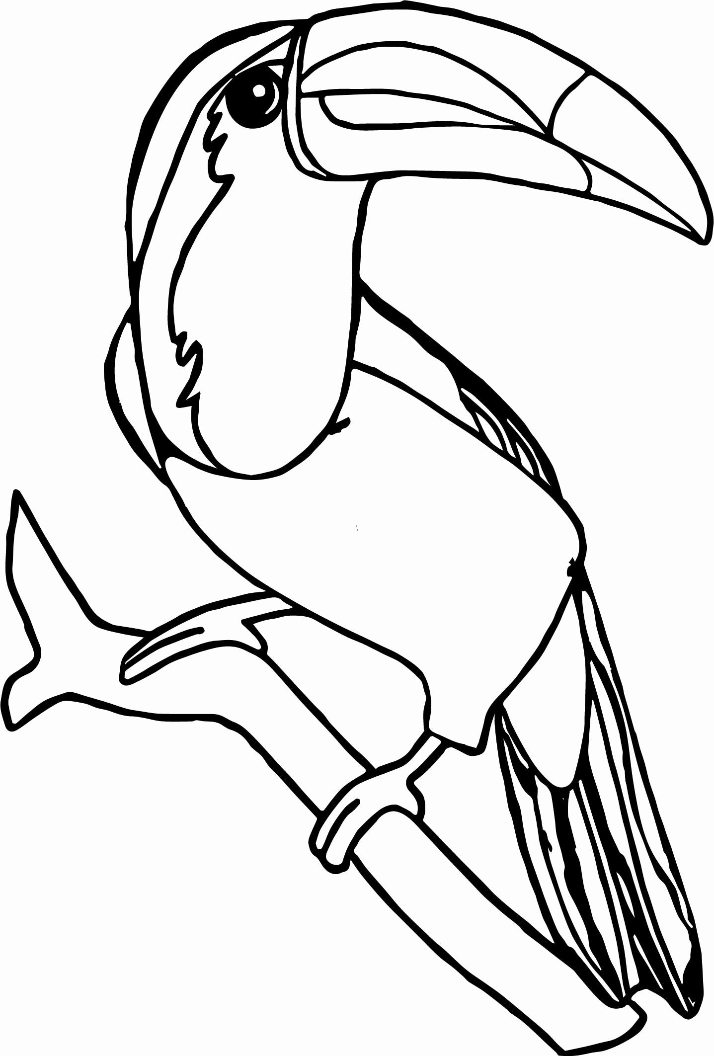 Toucans Drawing At Getdrawings