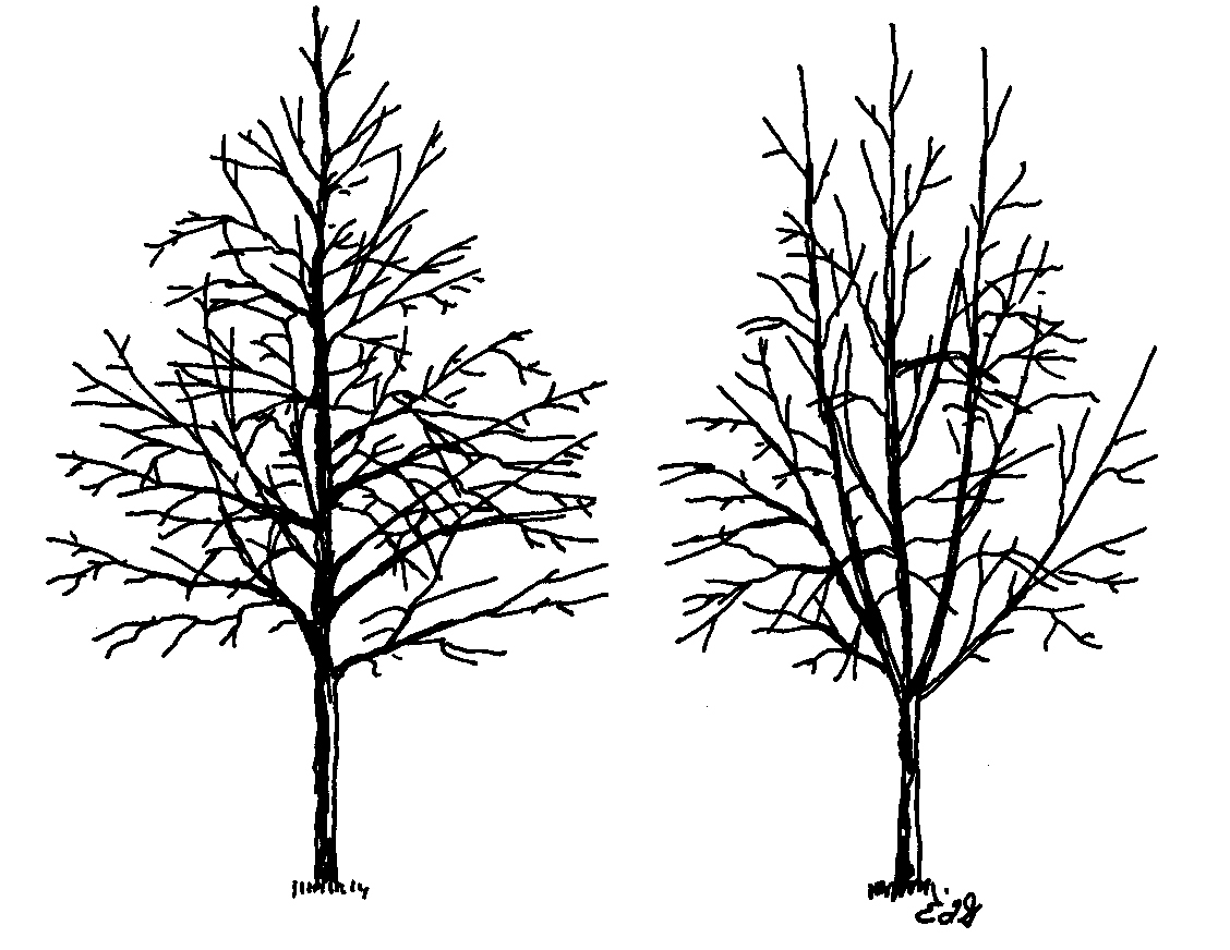 Tree Branches Drawing At Getdrawings