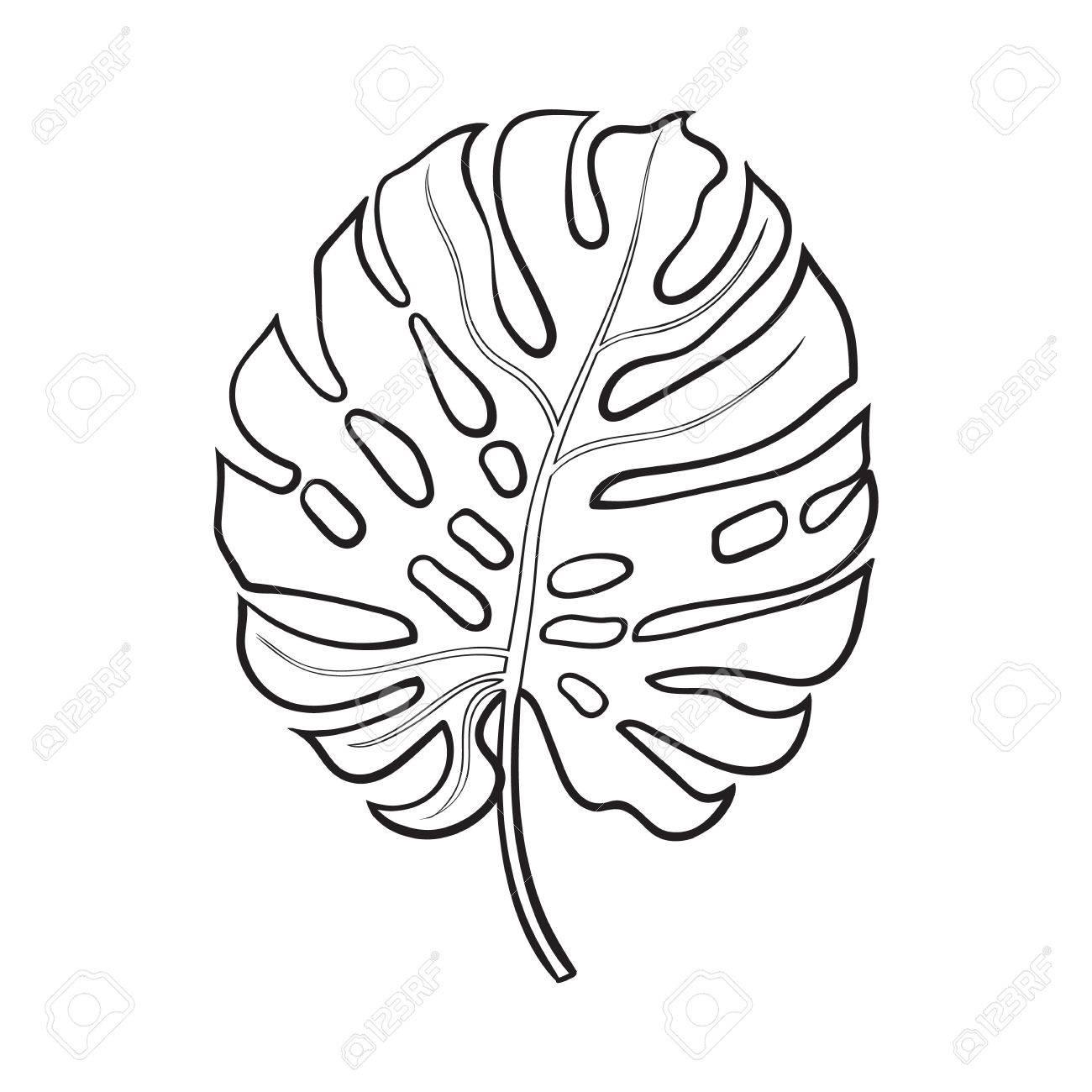 Tropical Leaves Drawing At Getdrawings