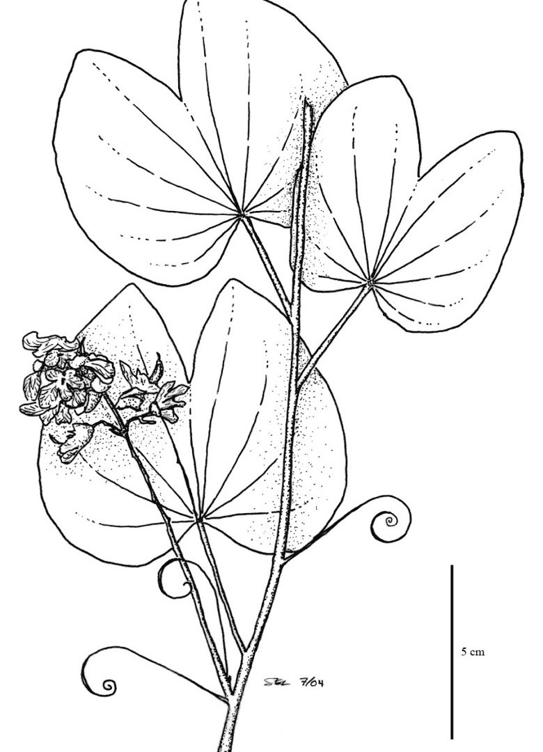 Tropical Rainforest Drawing At Free For