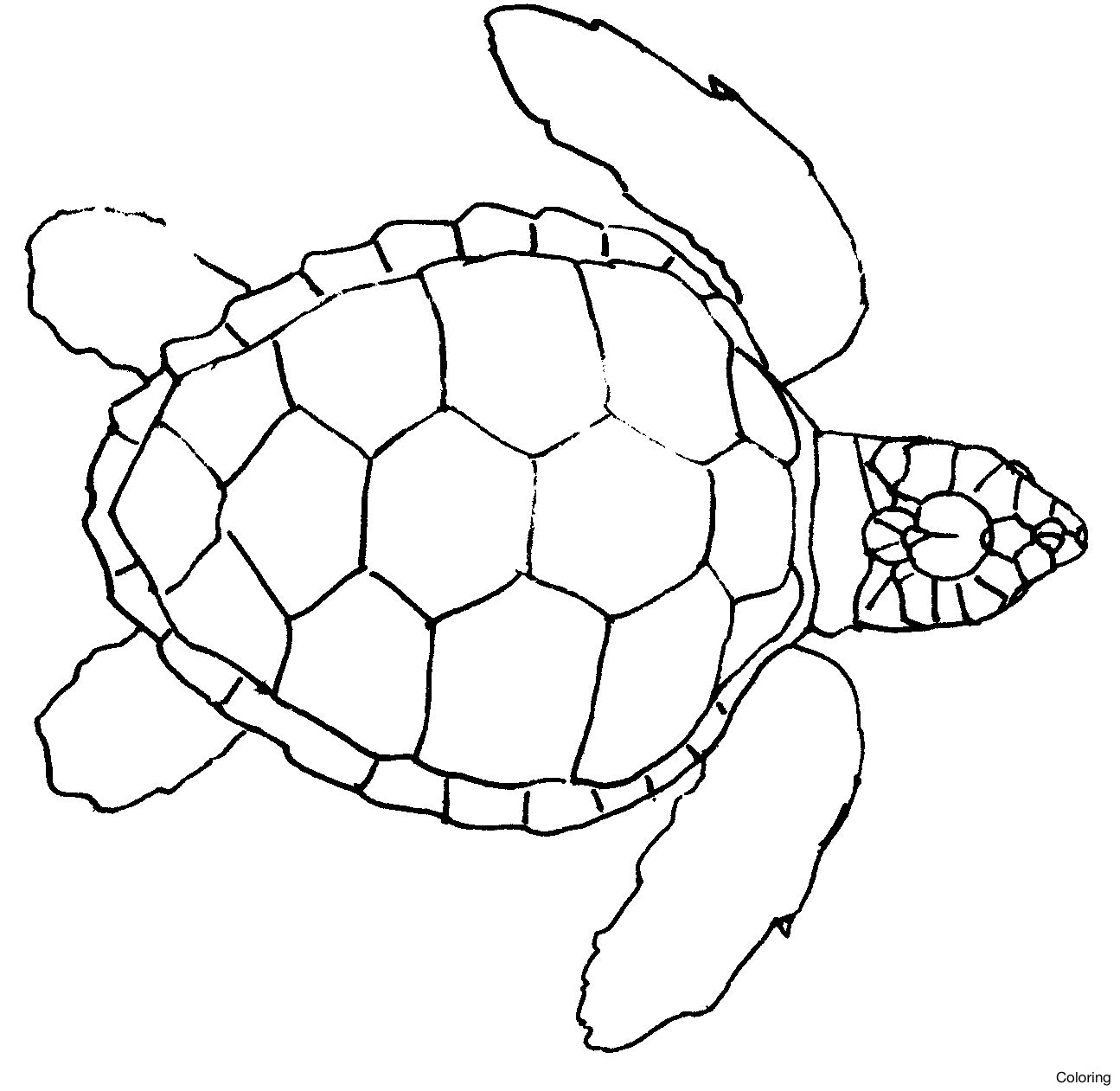 Turtle Line Drawing At Getdrawings