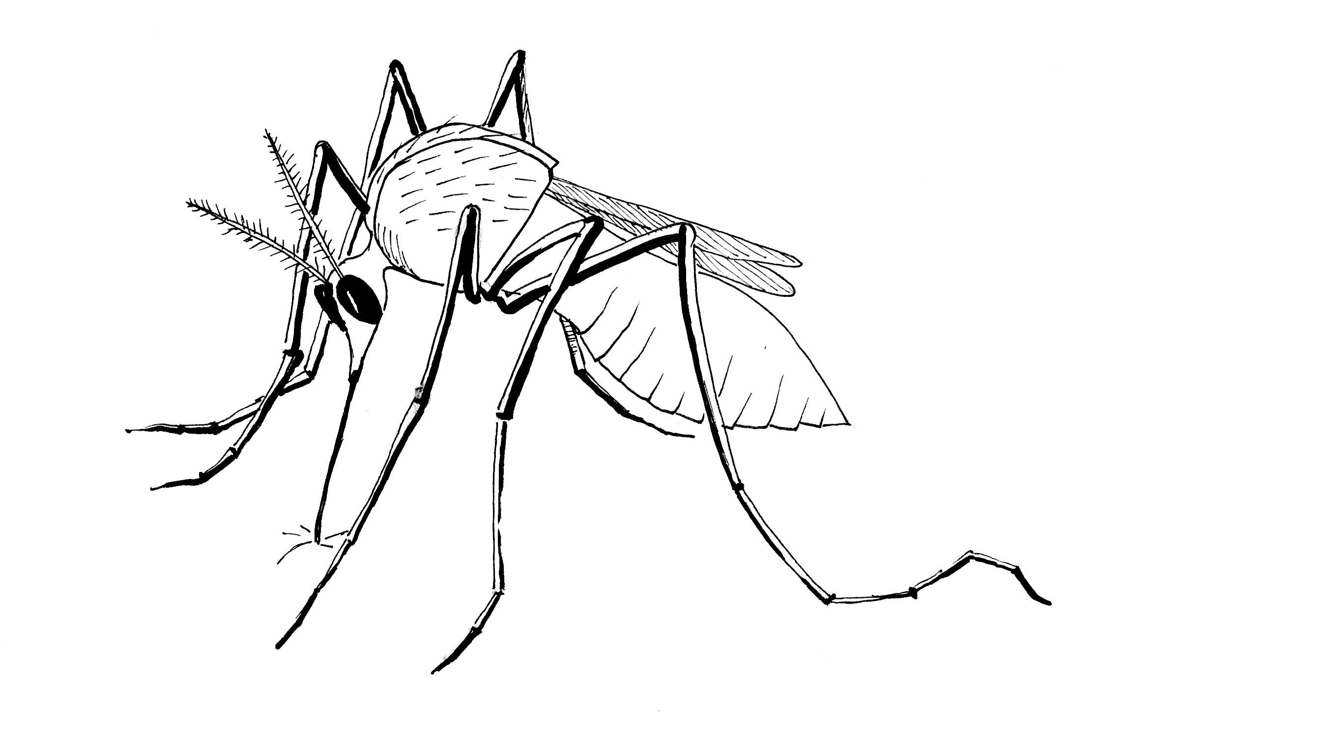Virus Drawing At Getdrawings