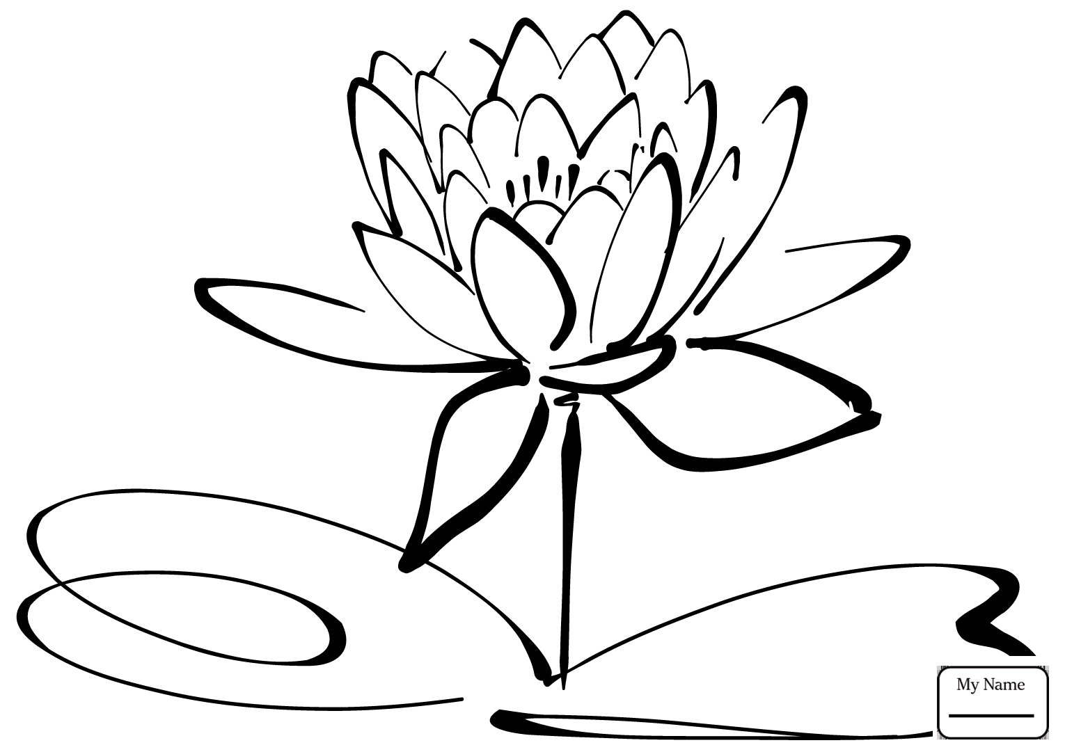 Waterlily Drawing At Getdrawings