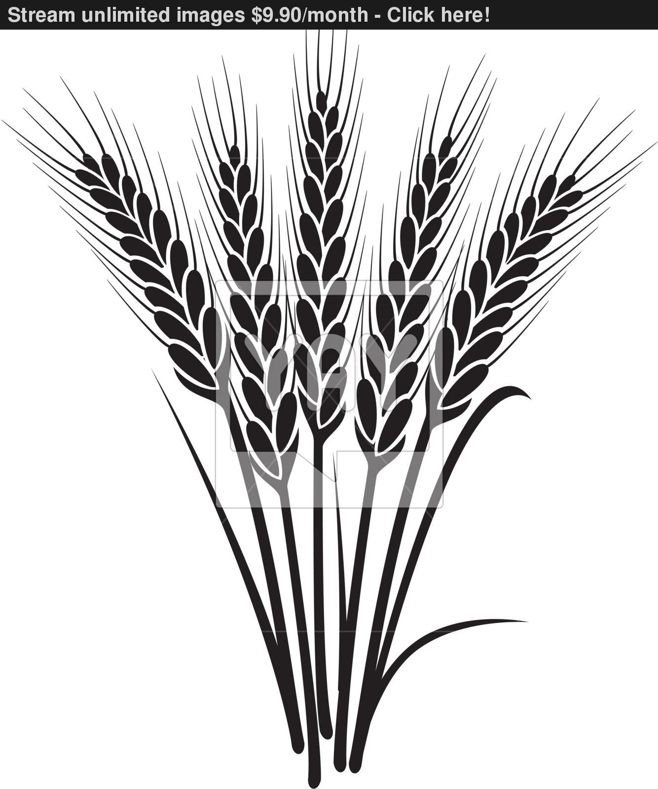 Wheat Plant Drawing At Getdrawings