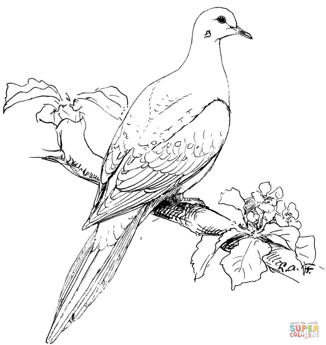 White Doves Drawing At Getdrawings