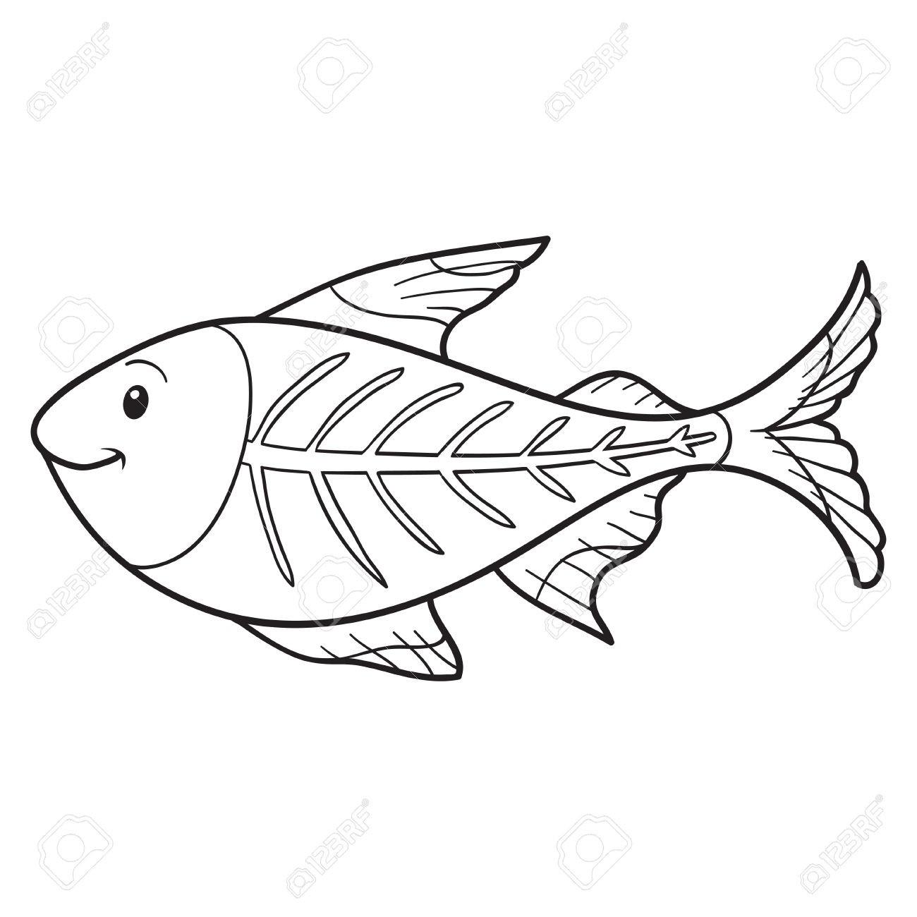 X Ray Fish Drawing At Getdrawings