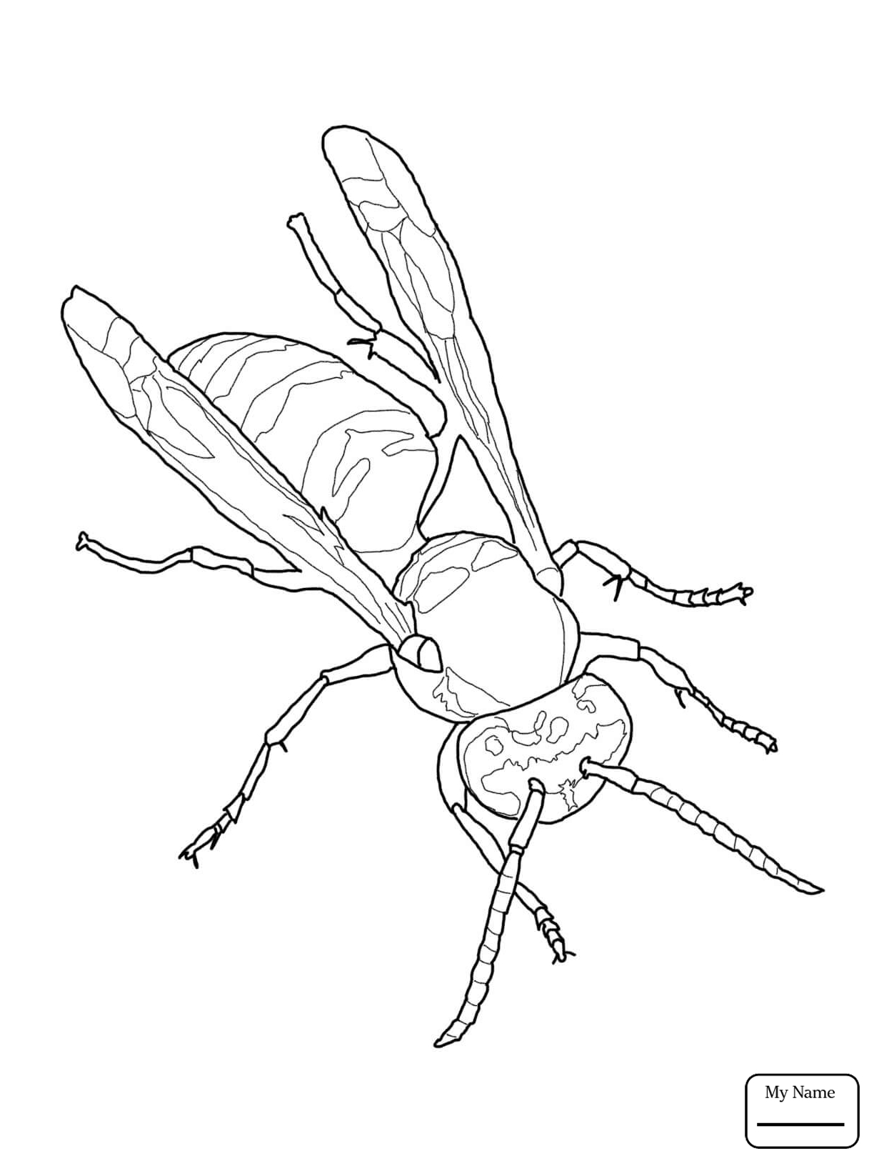 Yellow Jacket Drawing At Getdrawings