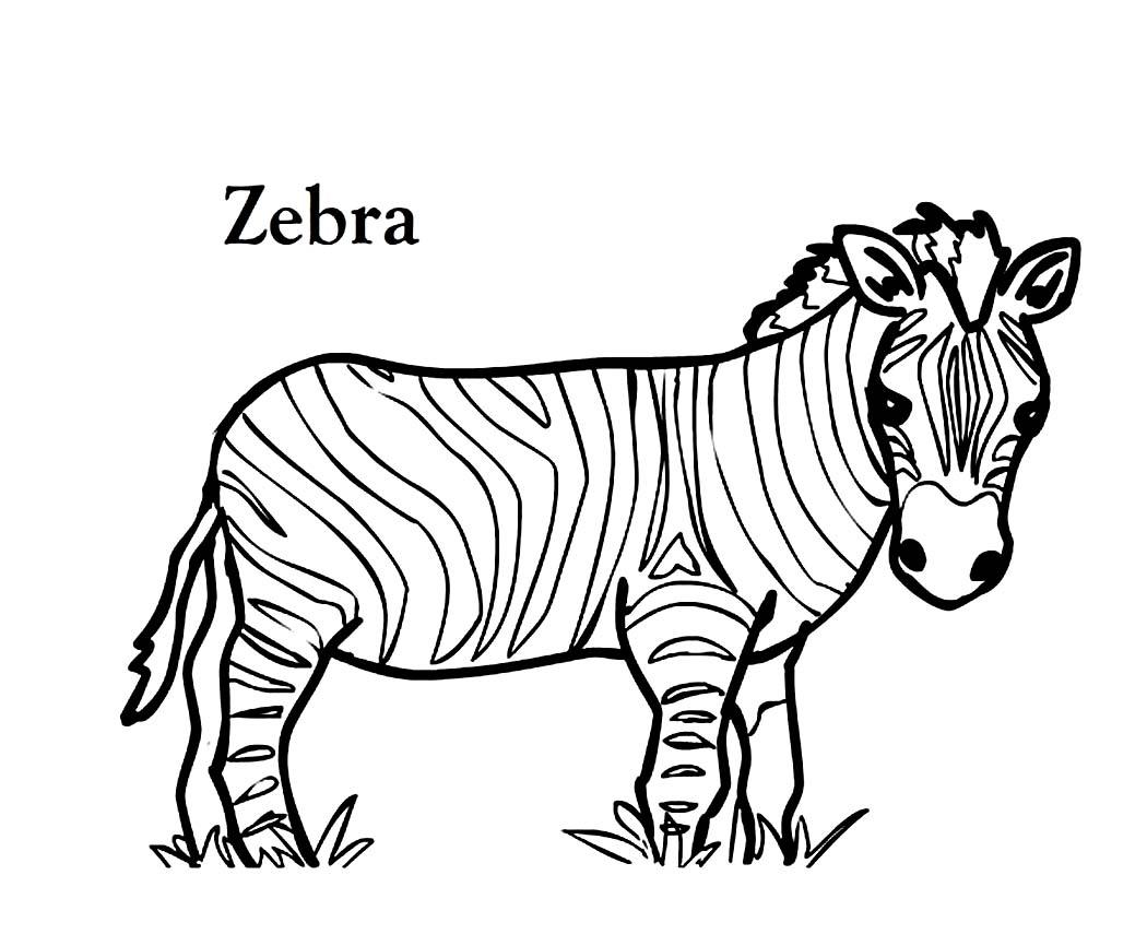 Zebra Line Drawing At Getdrawings