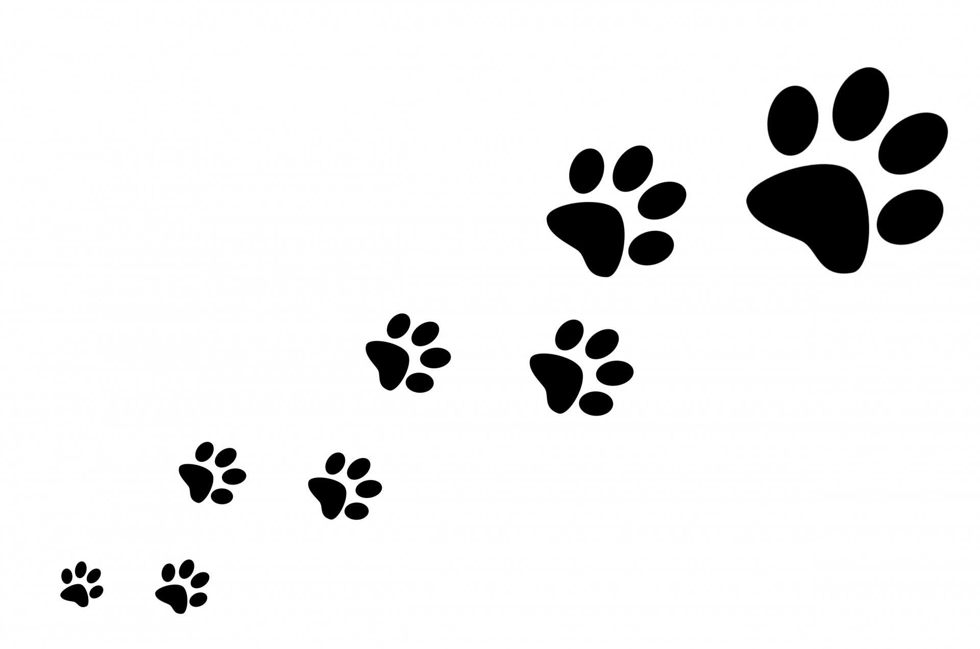 Dog Paw Silhouette At Getdrawings