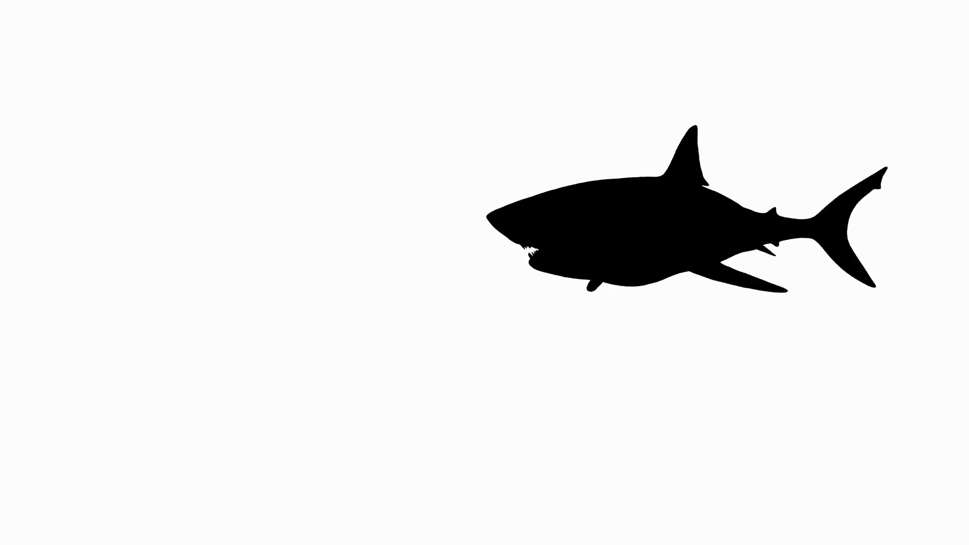 Great White Shark Silhouette At Getdrawings
