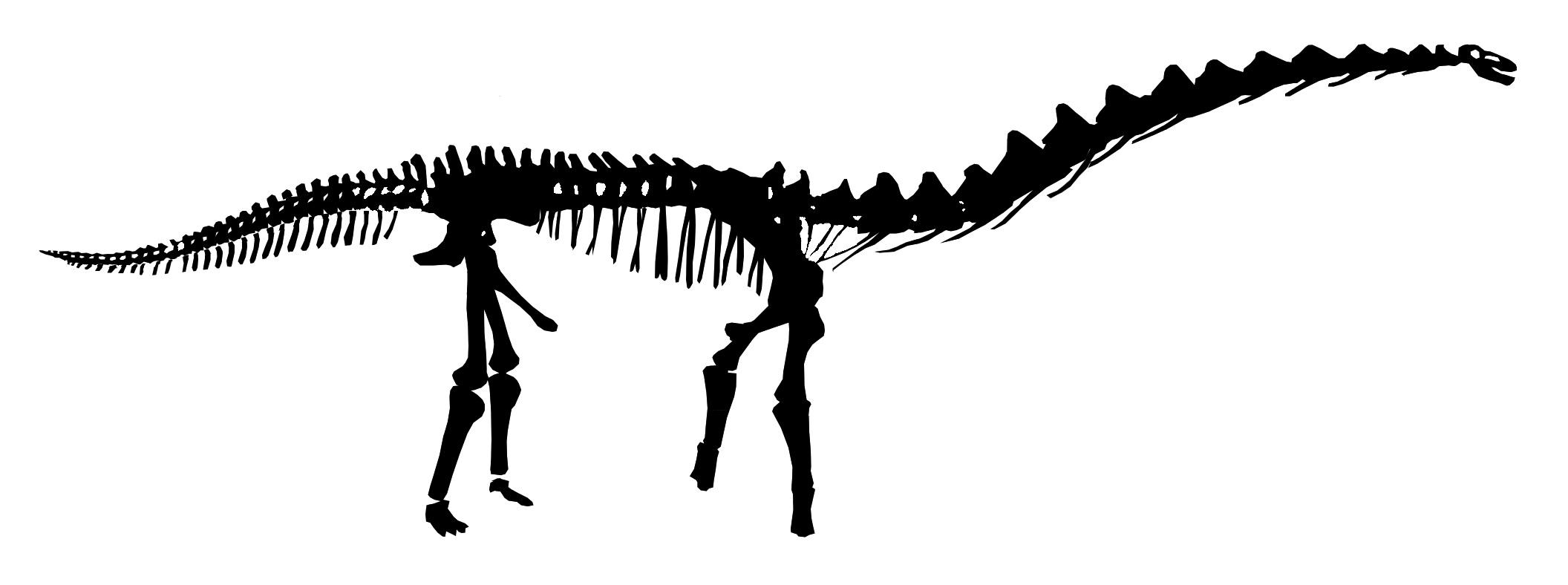 T Rex Skull Silhouette At Getdrawings