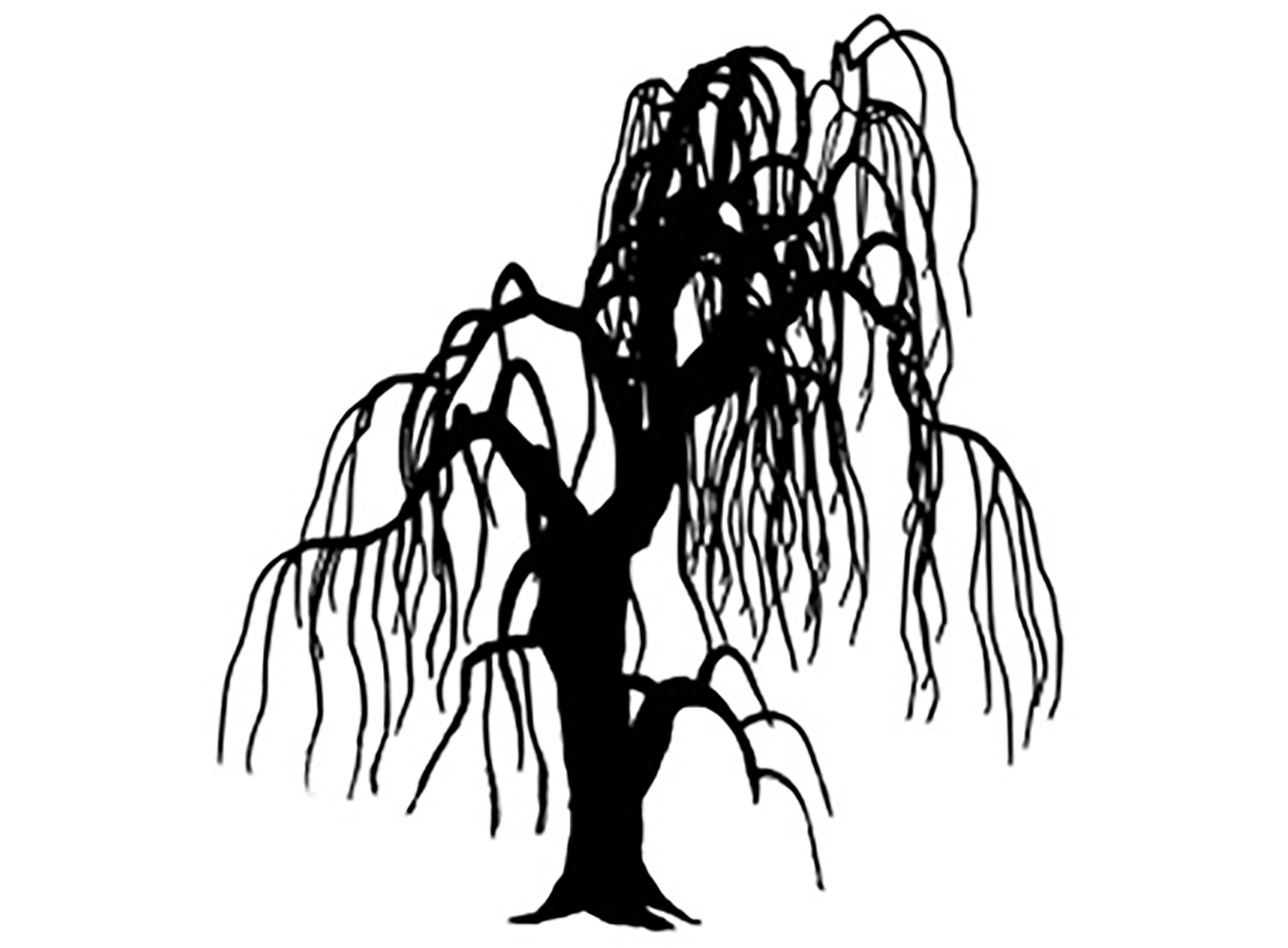 Weeping Willow Silhouette At Getdrawings