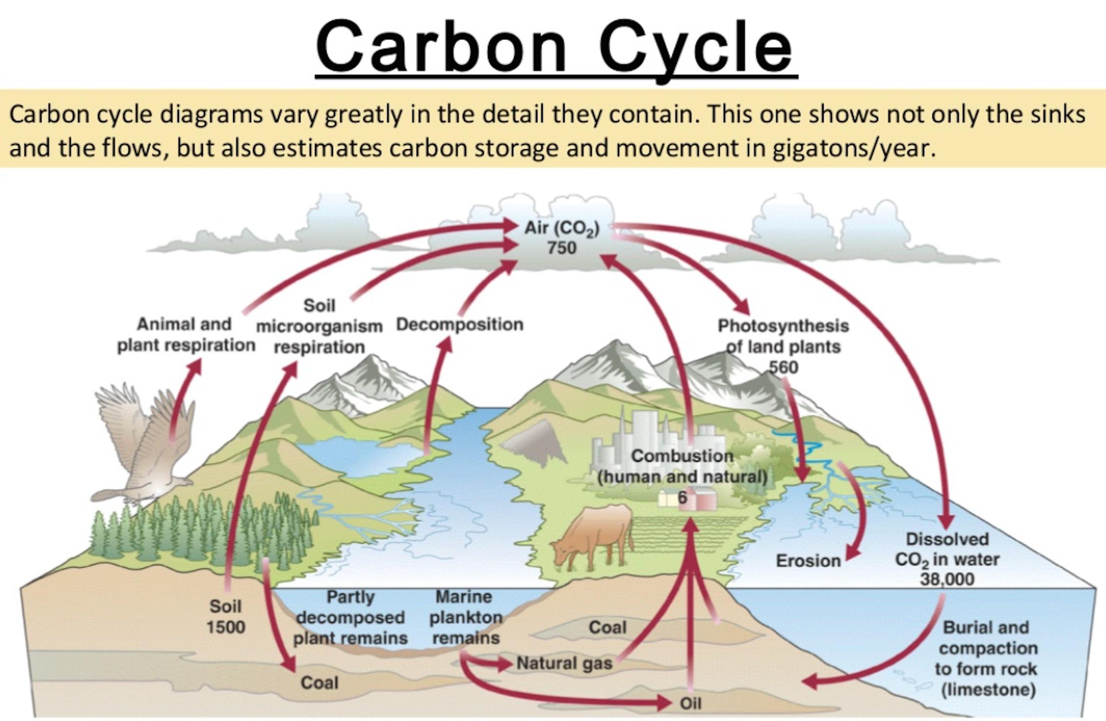Carbon Cycle Drawing At Getdrawings