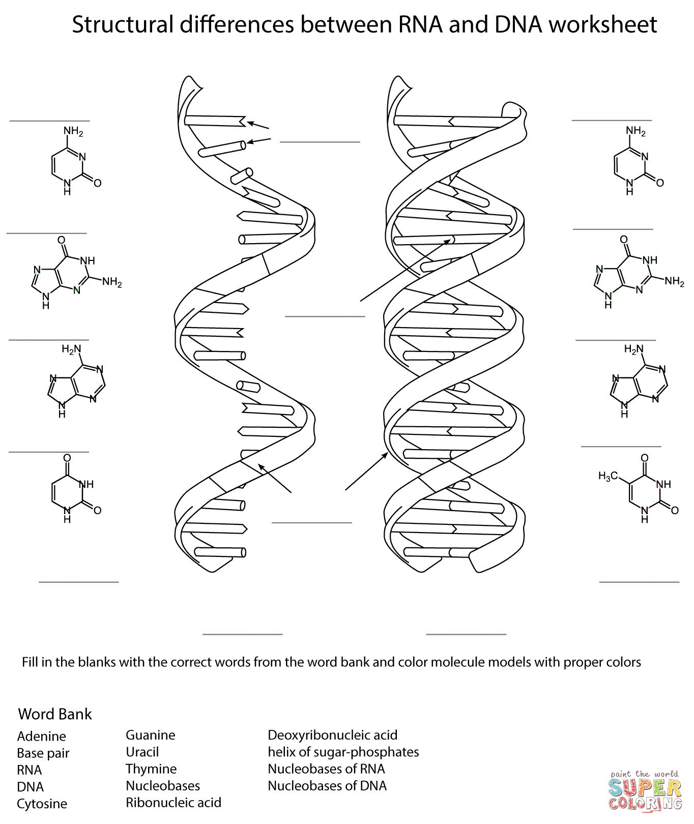 Dna Drawing Labeled At Getdrawings