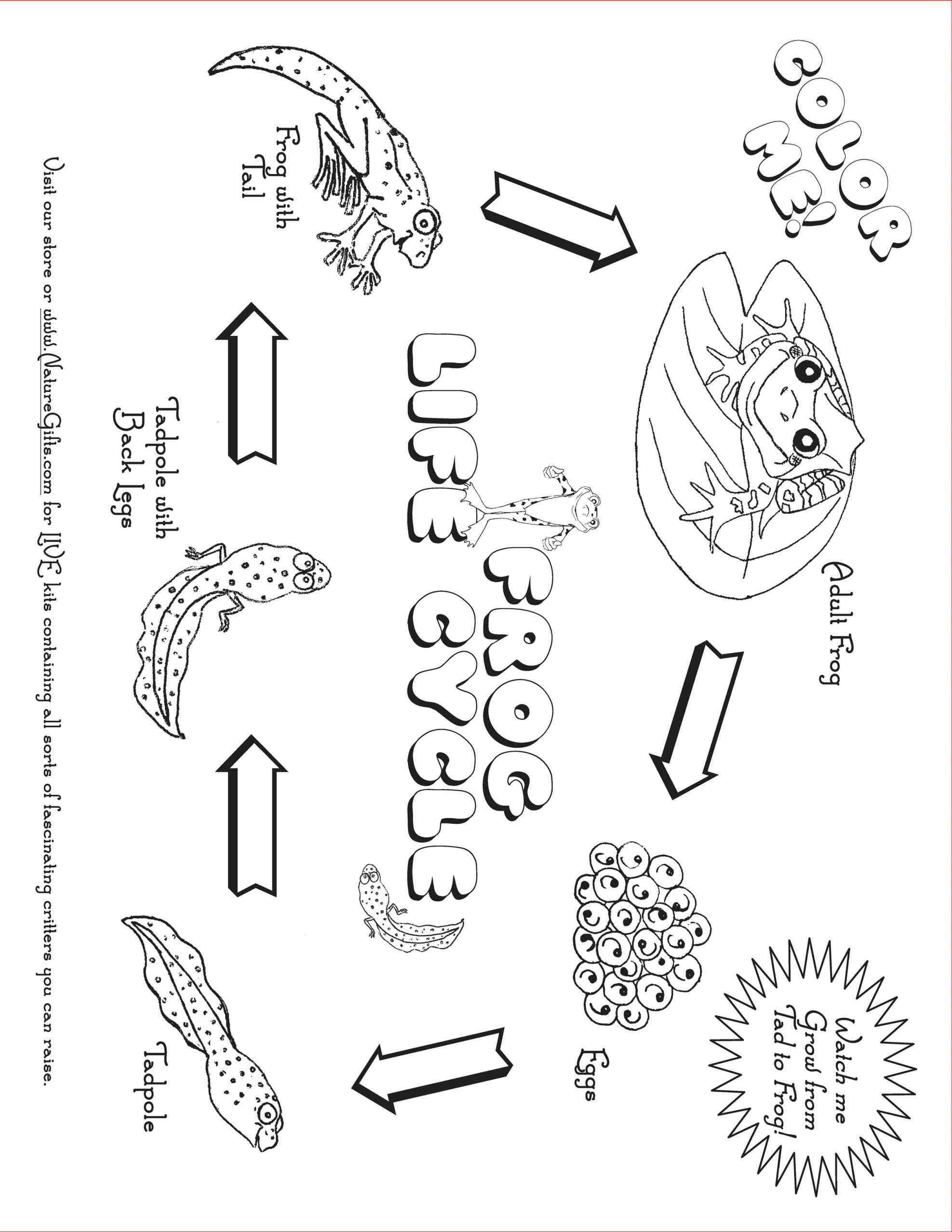 Plant Life Cycle Drawing At Getdrawings