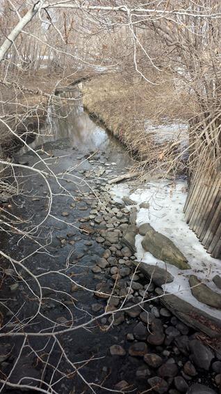Confederation Park February 2015
