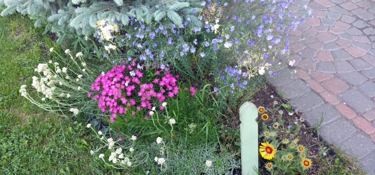 Garden Native Wildflowers