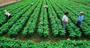 Khởi nghiệp nông nghiệp vẫn còn nhiều thách thức