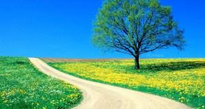 Câu chuyện Đại Bàng và Ốc Sên: Bài học của thành công