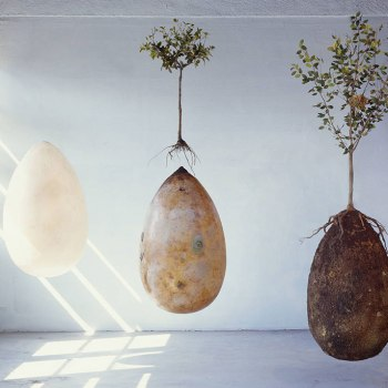 Photo of death pods that grow trees