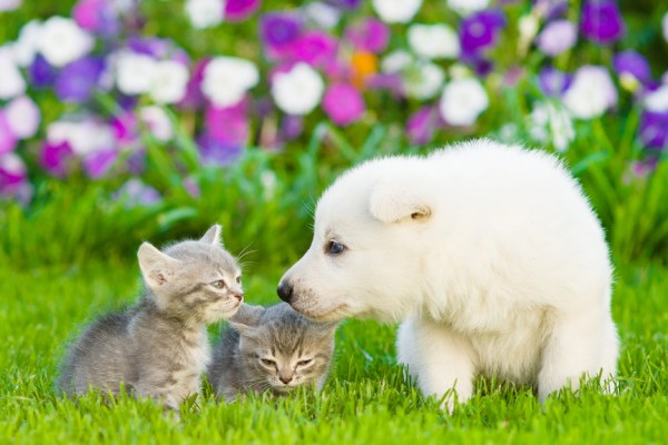 Photo of kittens and puppies: Future of aging not all puppies and kittens