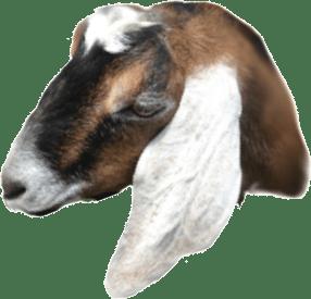 Goat Head Waze Info Page