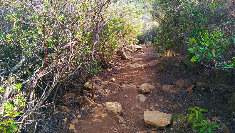 San Diego Hiking: Manzanita Tunnel on Black Mountain Trail