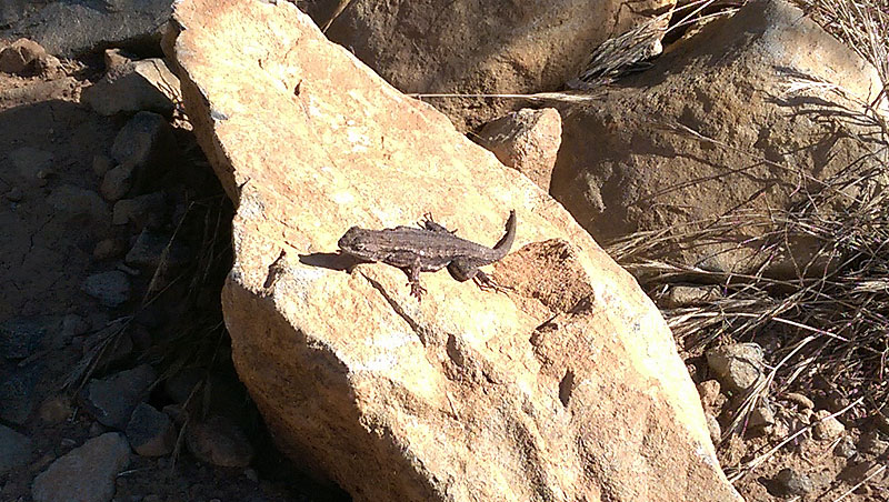 San Diego Hiking: Black Mountain Wildlife
