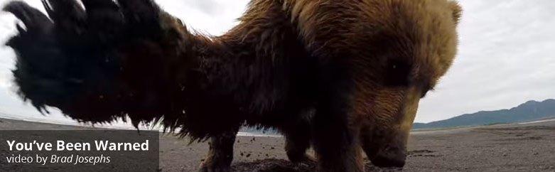 Grizzly Bear Slaps GoPro by Brad Josephs