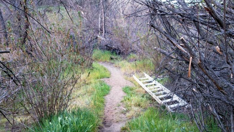 Bell Bluff hike