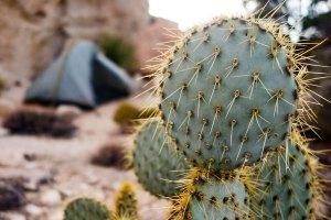 Joshua Tree - Desert Queen Mine