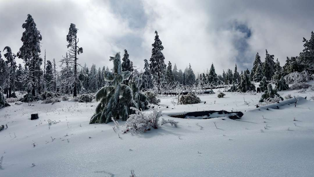 Cuyamaca Peak Hike