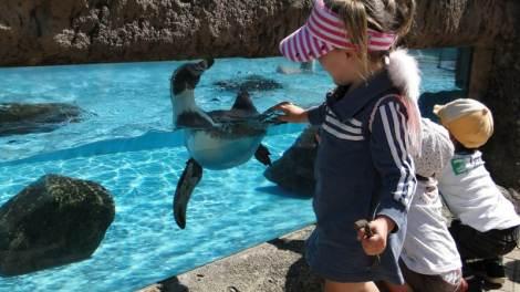 asa zoo penguins