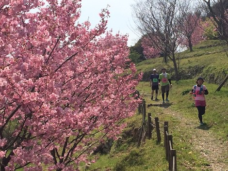 island trail blossom