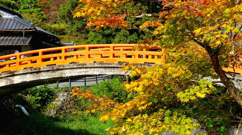 autumn leaves catch the sunlight at sekiun bridge taishaku-kyo hiroshima