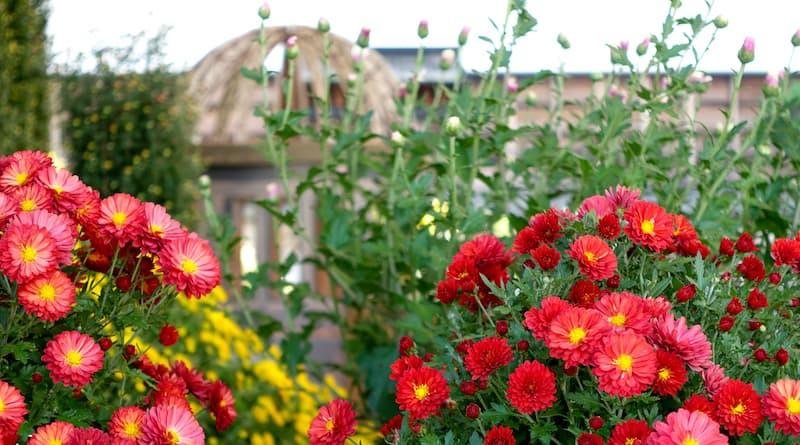 hiroshima castle chrysanthemum exhibition 2016 a-bomb dome peace memorial park