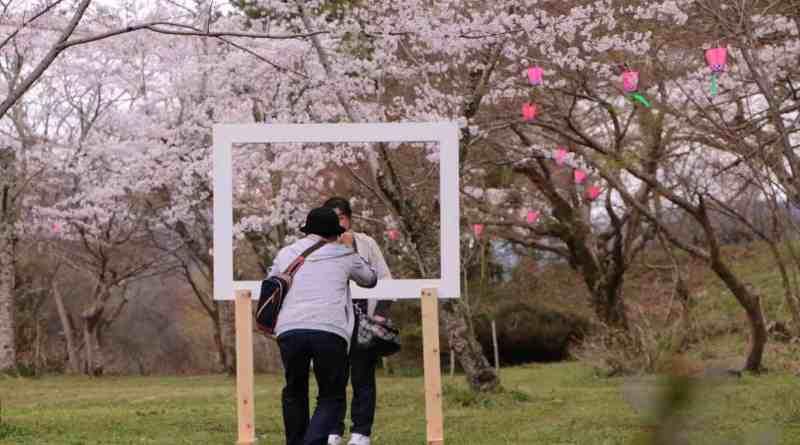 Miyoshi Sakura Matsuri Ozekiyama Koen