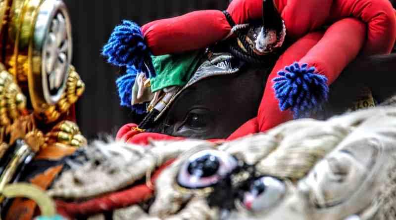 Cows get dressed and decorated before the Mibu-no-hanadaue rice planting festival in Kita-hiroshima Japan