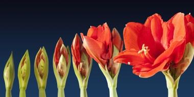 grow_blossom_time_lapse