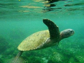 turtleswims3 sm